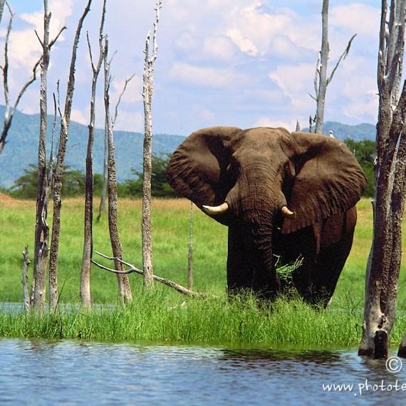 www.phototeam-nature.com-antognelli-zimbabwe-kariba-elephant