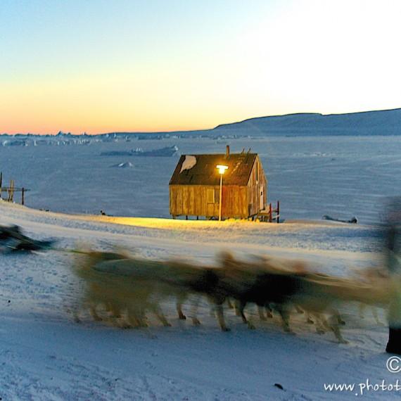 www.phototeam-nature.com-antognelli-groenland-greenland-nanoq-polar bear-ours polaire-hunting-chasse-traineau-chien-dog sleg-savissivik-nuit polaire