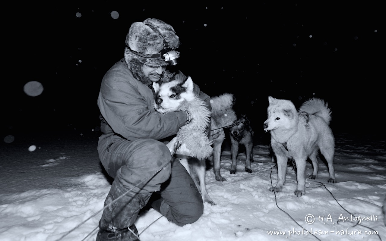 www.phototeam-nature.com-antognelli-greenland-nuussuaq-hunter-dog