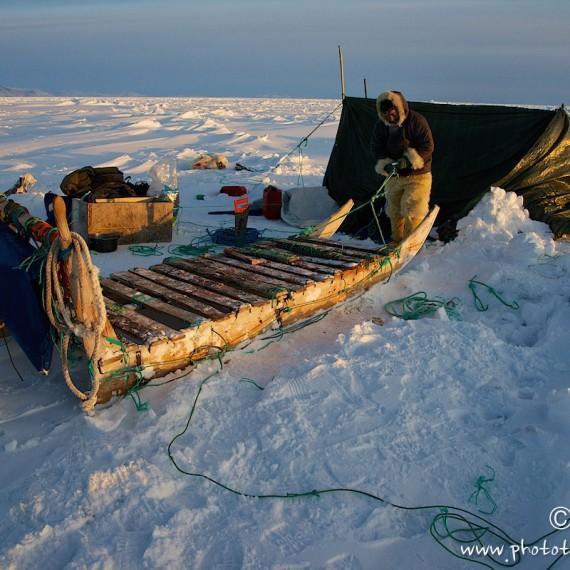 www.phototeam-nature.com-antognelli-groenland-greenland-nanoq-polar bear-ours polaire-hunting-chasse-traineau-chien-dog sleg-savissivik-camp-tente