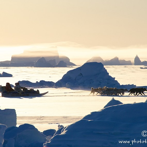 www.phototeam-nature.com-antognelli-groenland-greenland-hunting-chasse-traineau-chien-dog sleg-qaanaaq