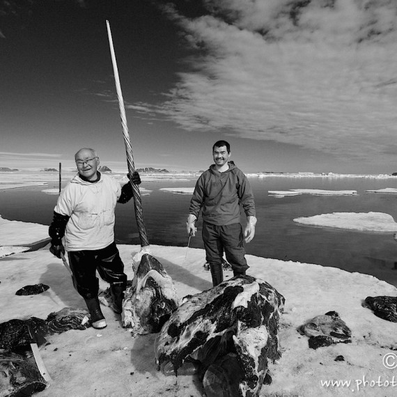 www.phototeam-nature.com-antognelli-groenland-greenland-narwhal-narval-chasse-hunting-kayak-rostre