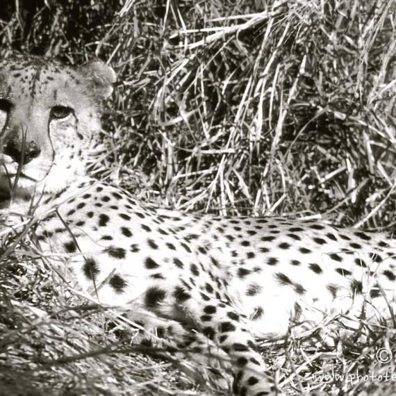 www.phototeam-nature.com-antognelli-afrique du sud-