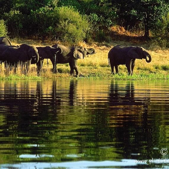 www.phototeam-nature.com-antognelli-botswana-elephant
