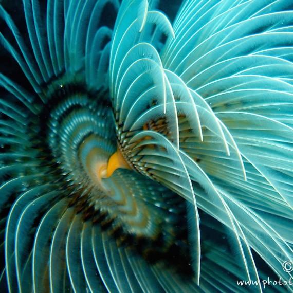 www.phototeam-nature.com-antognelli-Méditerrannée - France