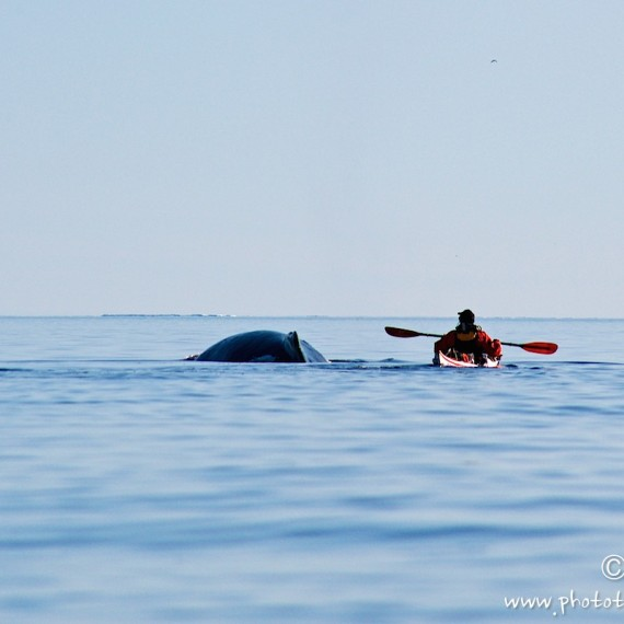www.phototeam-nature.com-antognelli-groenland-greenland-expedition-kayak-kokatat-sea kayaking uk-reed-baleine a bosses