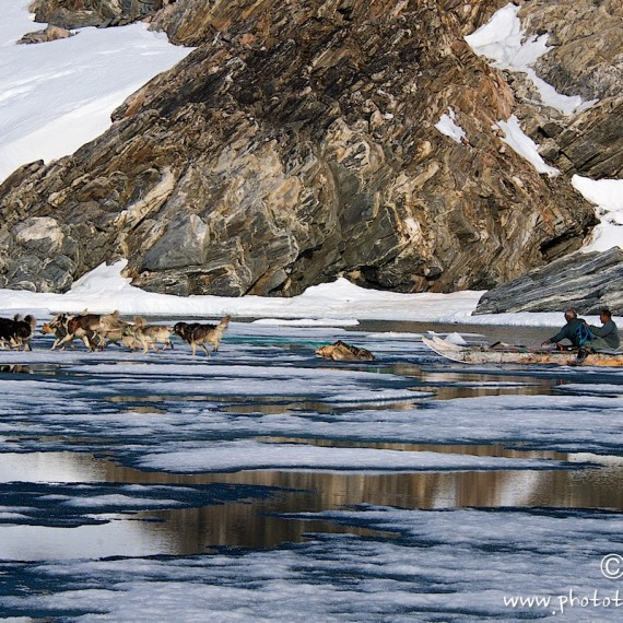 www.phototeam-nature.com-antognelli-groenland-greenland-