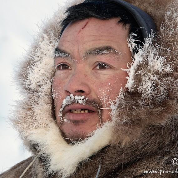 www.phototeam-nature.com-antognelli-groenland-greenland-nanoq-polar bear-ours polaire-hunting-chasse-traineau-chien-dog sleg-savissivik-olennguaq