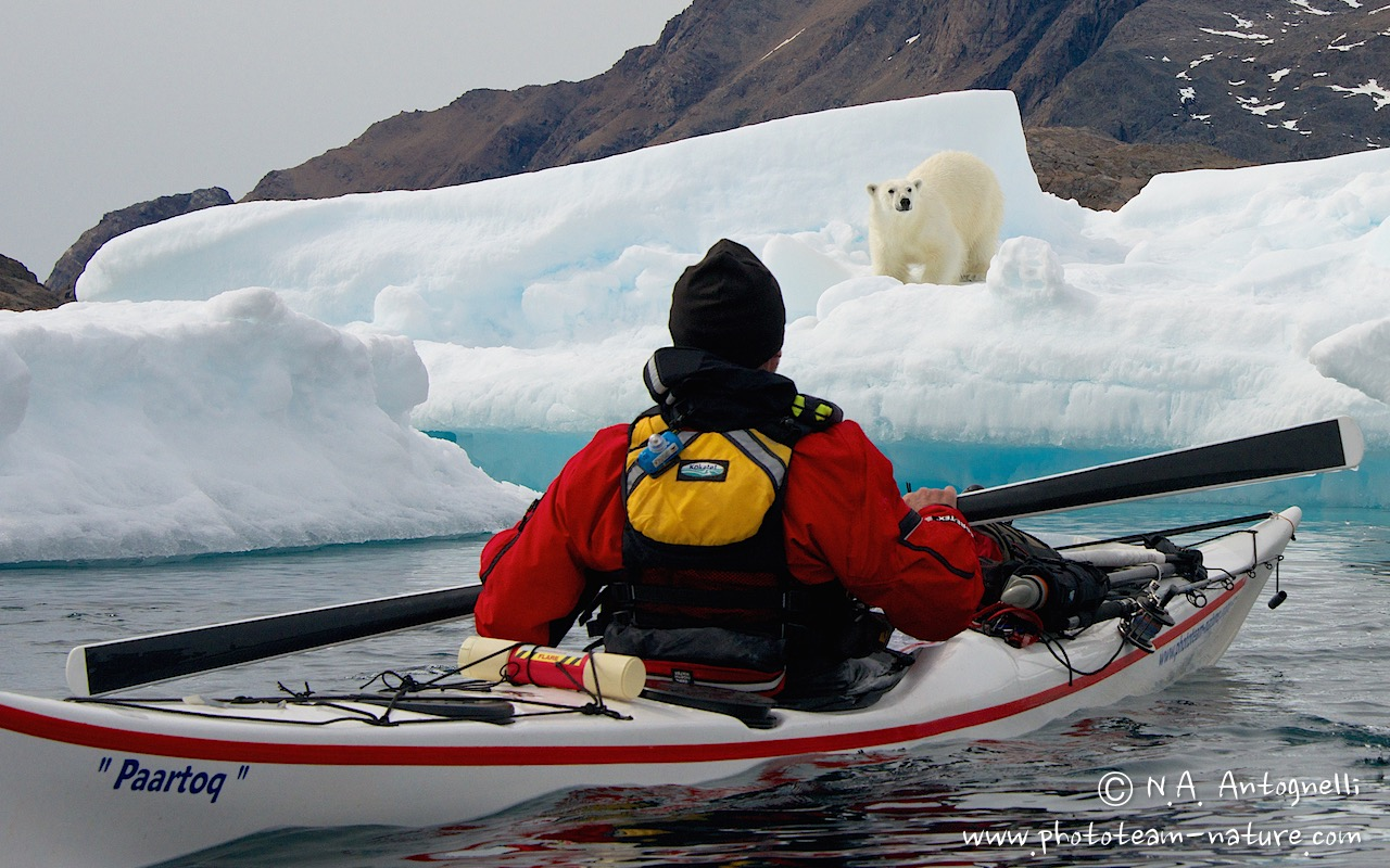 www.phototeam-nature.com-antognelli-greenland-kayak-expedition-sea kayaking uk-kokatat-ours polaire-polar bear
