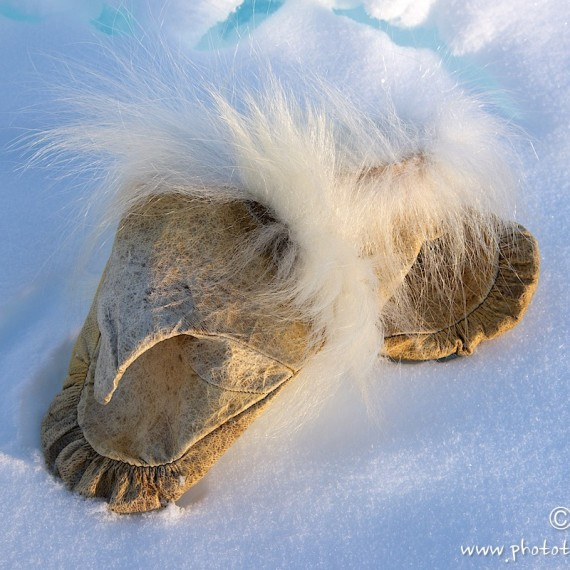 www.phototeam-nature.com-antognelli-groenland-greenland-nanoq-polar bear-ours polaire-hunting-chasse-traineau-chien-dog sleg-cap york-moufles-banquise
