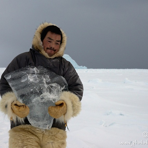 www.phototeam-nature.com-antognelli-groenland-greenland-nanoq-polar bear-ours polaire-hunting-chasse-