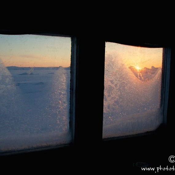 www.phototeam-nature.com-antognelli-groenland-greenland-nanoq-polar bear-ours polaire-hunting-chasse-cap york-cabane