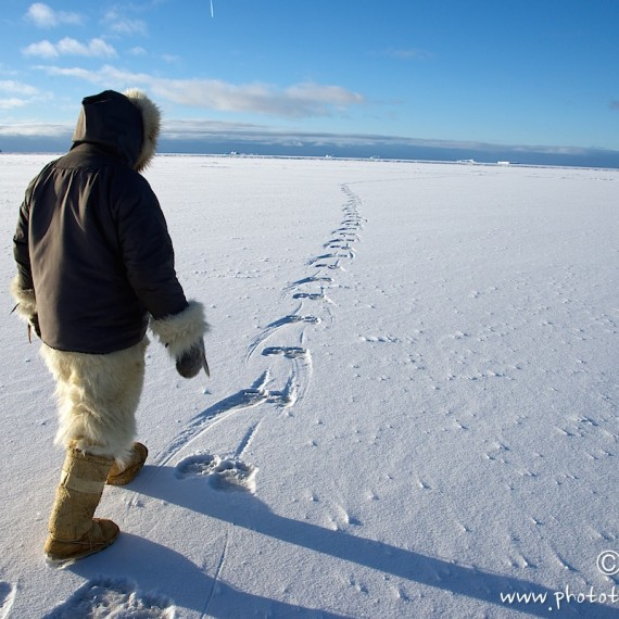 www.phototeam-nature.com-antognelli-groenland-greenland-nanoq-polar bear-ours polaire-hunting-chasse-traineau-trace
