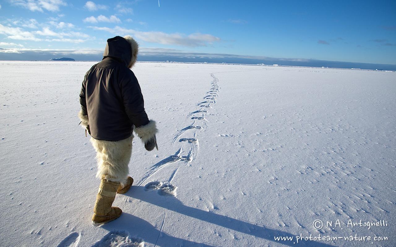 www.phototeam-nature.com-antognelli-greenland-savissivik-hunter-ours polaire-polar bear-trace-track