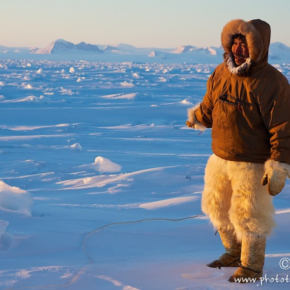 www.phototeam-nature.com-antognelli-groenland-greenland-nanoq-polar bear-ours polaire-hunting-chasse-traineau-chien-dog sleg
