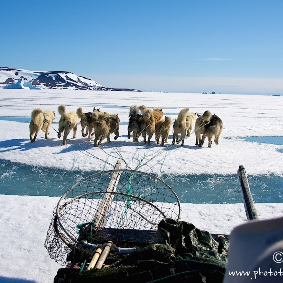 www.phototeam-nature.com-antognelli-groenaland-greenland-sled-traineau-chasse-hunting