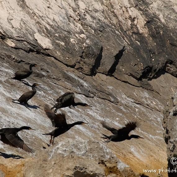 www.phototeam-nature.com-antognelli-sardaigne-italie-expediton-kayak-cormoran