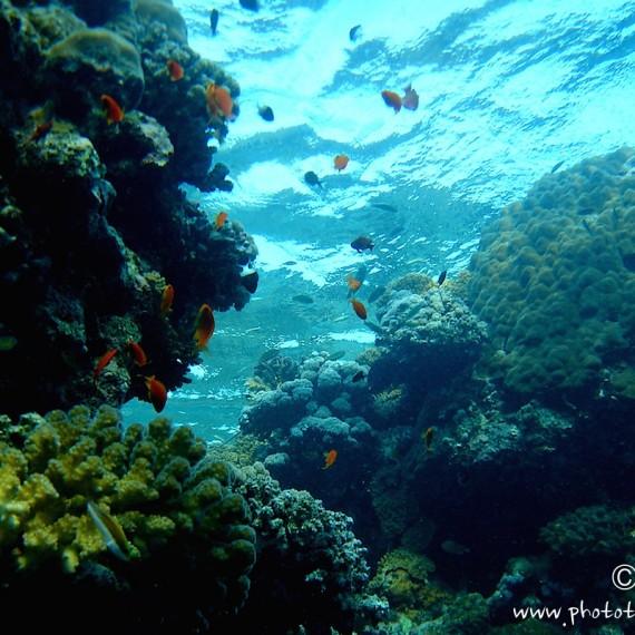 www.phototeam-nature.com-antognelli-soudan