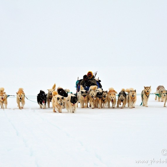 www.phototeam-nature.com-antognelli-Melville-expedition-traineau-chien-dog sled-groenland-greenland