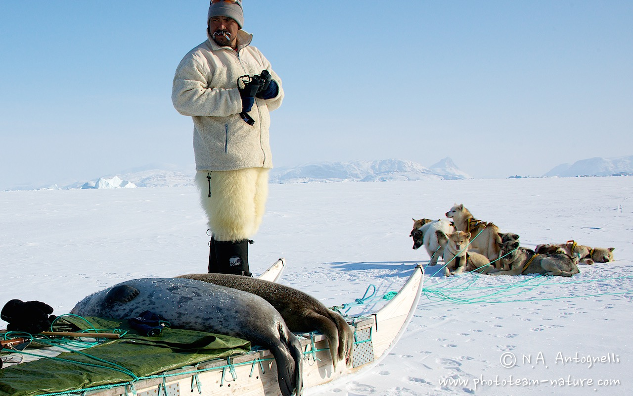 www.phototeam-nature.com-antognelli-greenland-nuussuaq-seal hunting