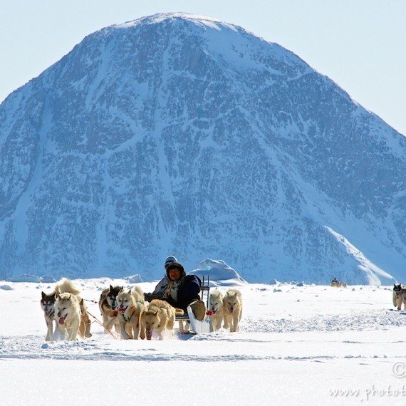 www.phototeam-nature.com-antognelli-greenland-nuussuaq-dog sled