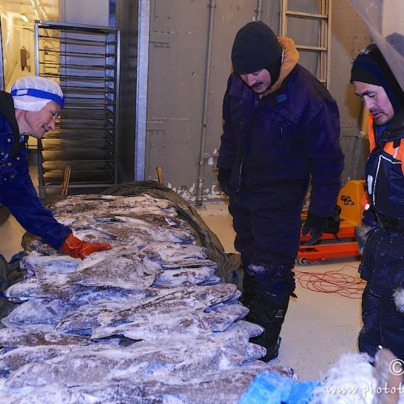 www.phototeam-nature.com-antognelli-greenland-nuussuaq-fisherman-halibut
