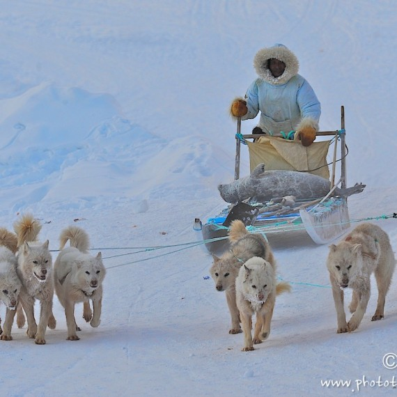 www.phototeam-nature.com-antognelli-greenland-nuussuaq-hunter-seal-dog sled
