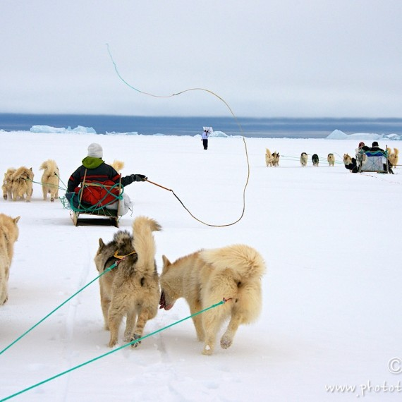 www.phototeam-nature.com-antognelli-greenland-nuussuaq-hunter-dog sled