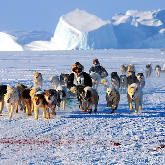 www.phototeam-nature.com-antognelli-greenland-innarsuit-dog sleg competition