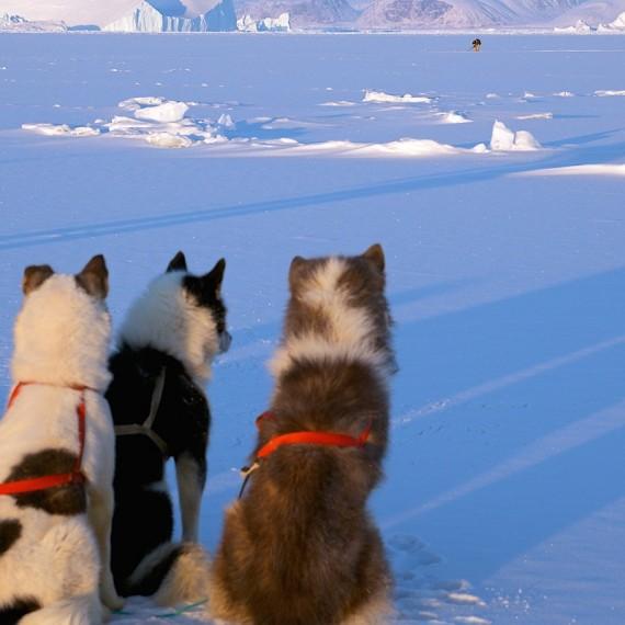 www.phototeam-nature.com-antognelli-groenland-greenland-l'ame de la banquise-chiens-traineau-banquise-dog sled